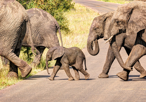 elephant safari family