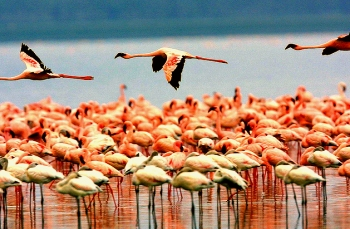 birding lake manyara safari