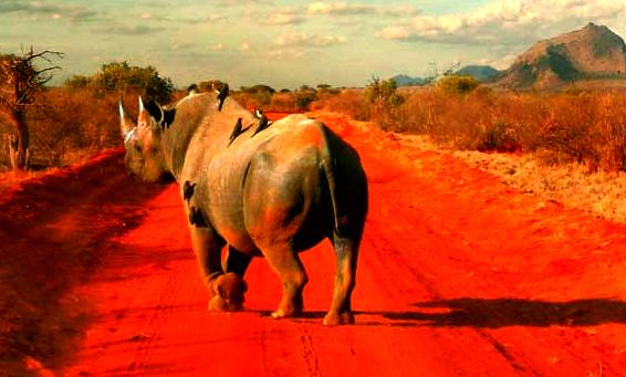 Rhino Tanzania Safari Tours